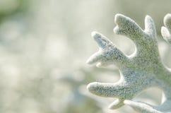La pianta verde chiaro bianca gradisce una fiaba Immagini Stock