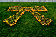 Viola e tulipani Fotografie Stock Libere da Diritti