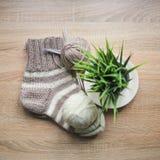 La pianta verde nel filato beige e bianco del vaso, dei ferri da maglia, Knitted ha barrato il calzino beige-beige è sulla tavola fotografia stock libera da diritti