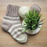 La pianta verde nel filato beige e bianco del vaso, dei ferri da maglia, Knitted ha barrato il calzino beige-beige è sulla tavola fotografie stock