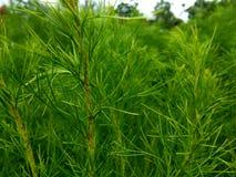 La pianta verde si sviluppa al montain fotografia stock libera da diritti