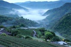 La piantagione di tè sistema all'alba con la nebbia di mattina nella valle distante, in Pingling, Taipei, Taiwan Immagine Stock