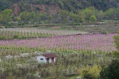 la piantagione, pesche, azienda agricola, l'agricoltura, ha coltivato i campi Fotografia Stock Libera da Diritti