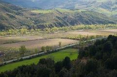 la piantagione, pesche, azienda agricola, l'agricoltura, ha coltivato i campi Fotografie Stock