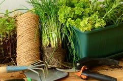 La piantatura della erba cipollina con gli strumenti di giardinaggio (cazzuola, rastrello e forbici di giardinaggio) Fotografia Stock