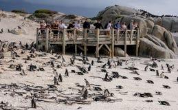 La piattaforma d'esame ai massi tira in Simonstown, Cape Town nel Sudafrica La spiaggia è domestica ad una colonia di Afr fotografia stock