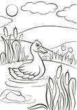 La piccola anatra sveglia nuota sullo stagno sorridere del ` s royalty illustrazione gratis