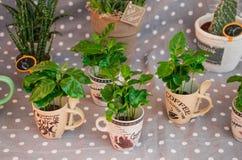 la piccola casa pianta la raccolta in piccoli vasi da fiori sui tum del pois Fotografia Stock
