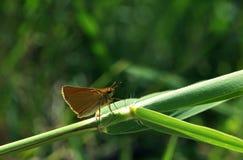 La piccola farfalla ha visto il miracolo Fotografia Stock Libera da Diritti