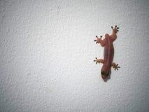 La piccola lucertola sulla parete Fotografia Stock Libera da Diritti