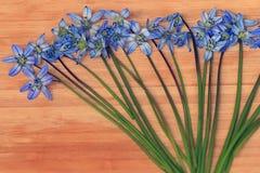 La piccola molla blu fiorisce su un fondo di legno Fotografie Stock