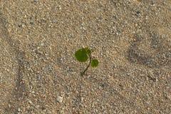 La piccola pianta verde fiorisce in un ambiente ostile immagini stock libere da diritti