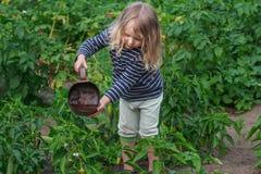 La piccola ragazza del giardiniere alle verdure d'innaffiatura dell'estate lavora immagini stock