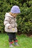 La piccola ragazza sveglia sta cercando i fiori sul prato della molla Immagini Stock Libere da Diritti