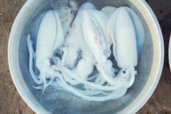 La piccola seppia fresca dei calamari ha preparato per la cottura con il ghiaccio immagine stock libera da diritti