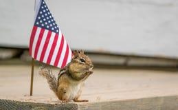La piccola tamia orientale divertente sta accanto alla bandiera americana Fotografia Stock
