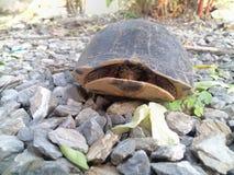 La piccola tartaruga fotografie stock libere da diritti