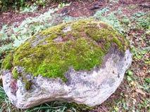 La piedra cubierta con un musgo Foto de archivo libre de regalías