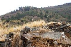 La piedra en la hierba secada Fotos de archivo