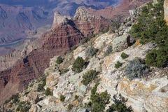 La piedra y las plantas diversas en el Grand Canyon Imagen de archivo libre de regalías