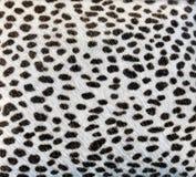 La piel blanca con los puntos negros le gusta un animal Foto de archivo libre de regalías