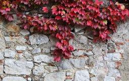 La pierre bloque le vieux mur, avec l'unpon de feuilles il Photo libre de droits