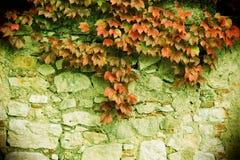 La pietra blocca la vecchia parete, con il unpon delle foglie  Immagini Stock Libere da Diritti