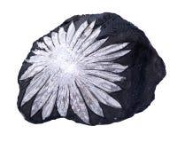 La pietra del crisantemo del fiore bianco dalla Cina illustrazione di stock