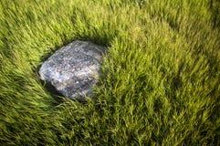 La pietra nell'erba verde Fotografia Stock