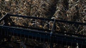 La pieza de trabajo de la segadora trillador de la cosechadora aisló almacen de video