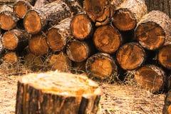 La pila de madera en foco en fondo con partir abre una sesión el foregroun imagen de archivo libre de regalías