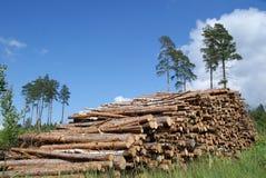 La pila de madera registra paisaje del verano Fotografía de archivo libre de regalías