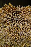La pila de palillos del incienso y de velas de fondo abstracto que mostraba el pábilo se preparó para rogar en templo budista tai Fotos de archivo libres de regalías