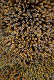 La pila de palillos del incienso y de velas de fondo que mostraba el pábilo se preparó para rogar en templo budista tailandés Imagen de archivo libre de regalías