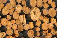 La pila de troncos de Brown de la madera cortó en la montaña Fotografía de archivo