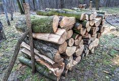 La pila de troncos de madera cortó en la madera Fotografía de archivo libre de regalías