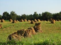 La pila del fieno di Amish accatasta asciutto in un campo del raccolto dell'estate di NYS fotografia stock
