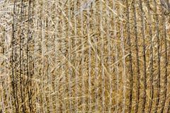 La pila del fondo del primo piano di paglia dopo il raccolto di cereale pota Immagini Stock