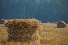La pila en frente con el fondo borroso en el campo después de la cosecha Imagenes de archivo