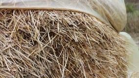 La pila grande de heno o de paja cubierta con polietileno se seca debajo del cielo abierto Una forma para los animales del campo  almacen de metraje de vídeo