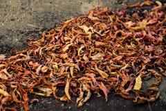 La pila grande de otoño secó las hojas en el pavimento foto de archivo libre de regalías