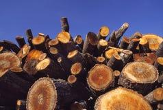 La pila hewed il legno Immagini Stock