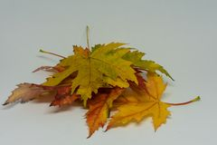 La pile de l'automne a coloré des feuilles d'isolement sur le fond blanc Le feuillage rouge et coloré jaune colore en automne la  Photo libre de droits