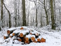 La pile de la neige a couvert des rondins, terrain communal de Chorleywood, Hertfordshire photos stock