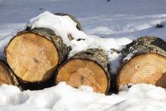 La pile du bois abattu ouvre une session la neige en parc d'hiver Image stock