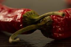 La pimienta de chile rojo en un fondo oscuro con agua cae Imagenes de archivo