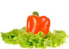 La pimienta y la ensalada hojean en el plato aislado en blanco Imagen de archivo libre de regalías