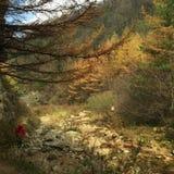 La pintura al óleo le gusta otoño Imagen de archivo