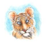La pintura hecha a mano coloreó el cachorro de tigre lindo principal de los lápices Foto de archivo