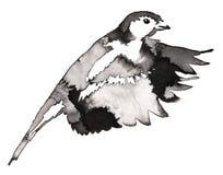 La pintura monocromática blanco y negro con agua y la tinta dibujan el ejemplo del pájaro del tit Foto de archivo